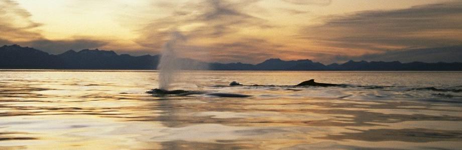 Whales Samana Samana Dominican Republic